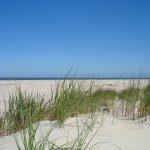 Ferien, Ferienhaus, Nessmersiel, Neßmersiel, Urlaub, Strand, Auszeit, Familienzeit, Holiday, Vermietung Ferienhäuser, Seehund, Robbe, Seestern, Entspannung,
